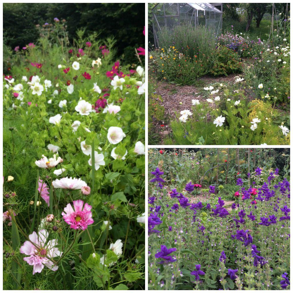 Locally grown flowers, British flowers. Birmingham. Tuckshop Flowers