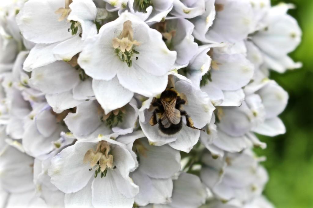 eco flowers Birmingham