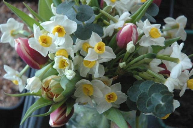Seasonal British flowers in Birmingham. Spring funeral flowers by Tuckshop Flowers