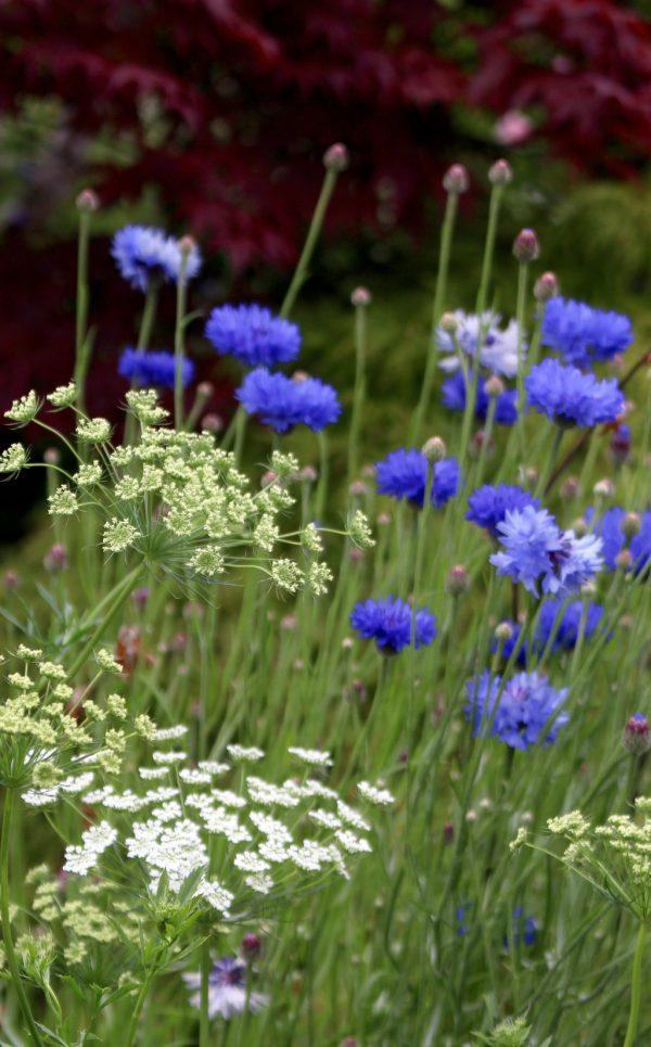 locally grown flowers Birmingham by Tuckshop Flowers