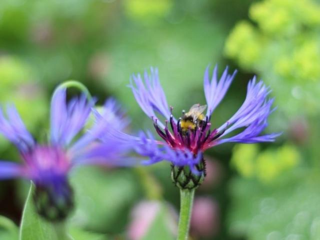 locally grown flowers in Birmingham by Tuckshop Flowers